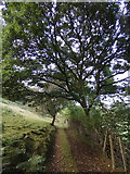 SN7277 : Track to Rhiwfron halt by Rudi Winter
