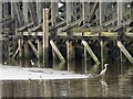 NZ2362 : Herons in the tidal basin at Dunston Staiths by Mike Quinn