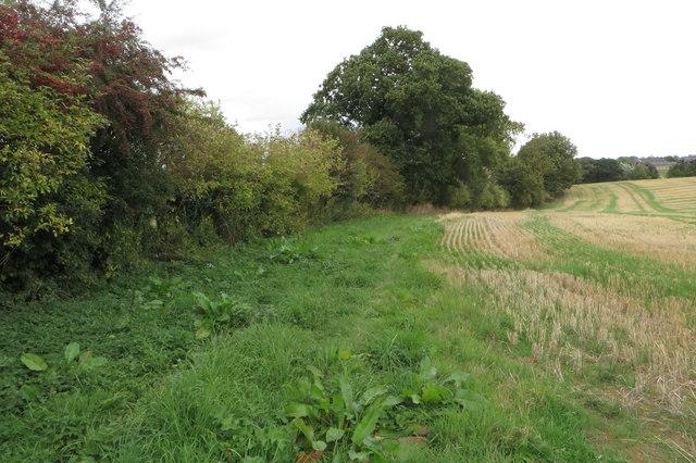 Field edge hedge