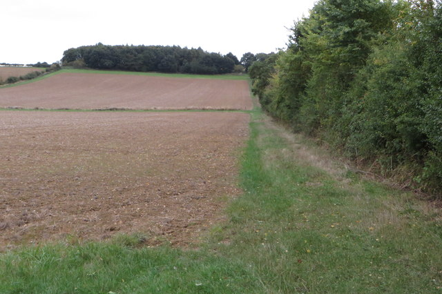 Stream between the fields