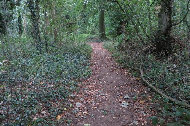 Path through Newbottle Spinney