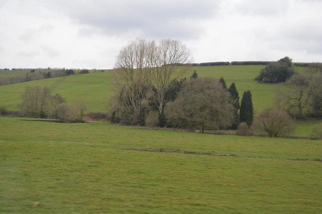 Woodland by River Culm