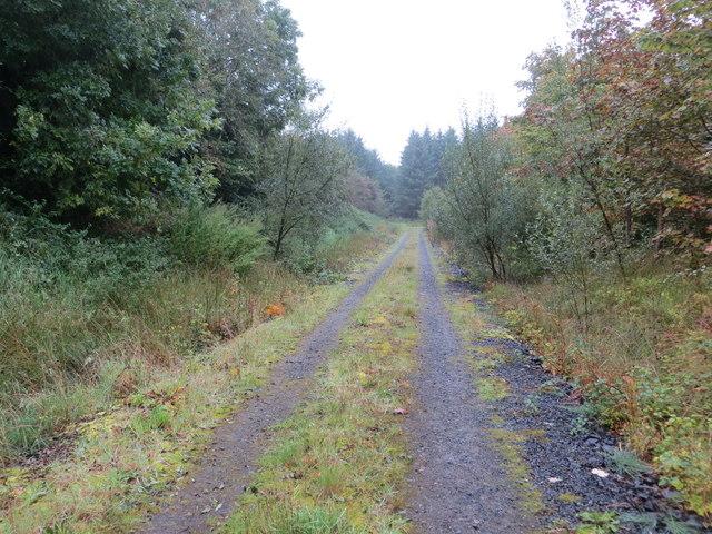 Woodland Track near Heathfield