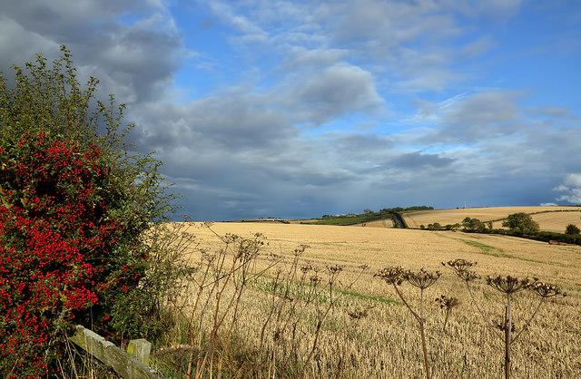 Farmland at Shoreswood