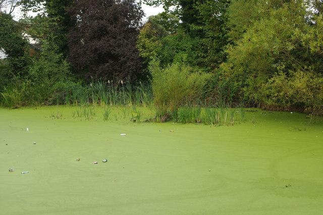 Beulah Hill Pond