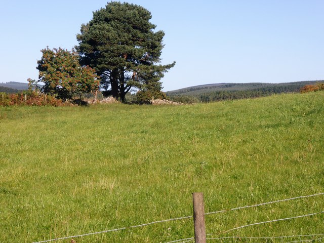 Stone field boundary with a few trees