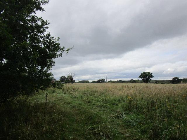 Field near Knighton