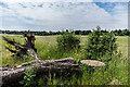 TQ2260 : Field by Ian Capper