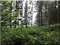 SO5312 : The edge of Beaulieu Wood by Jonathan Thacker