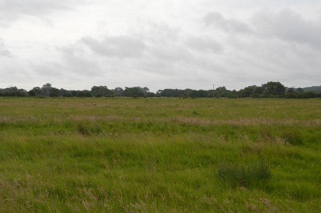 Meadow, Thames floodplain