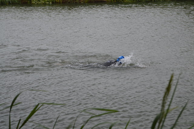 Openwater swimmer