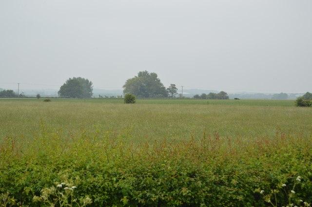 Flat farmland near Swavesey