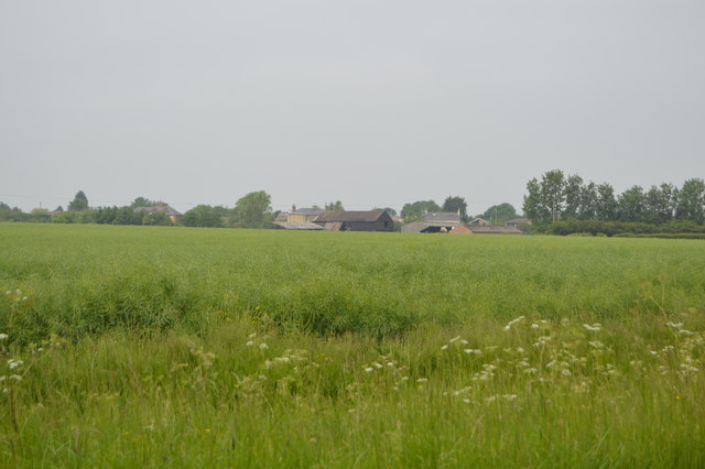 View towards Dairy Farm by N Chadwick