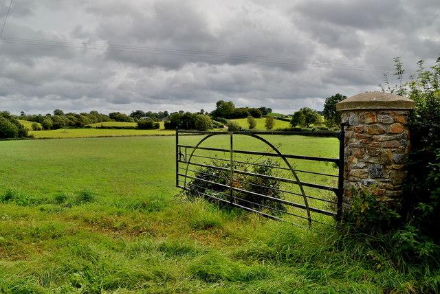 An open field, Camowen