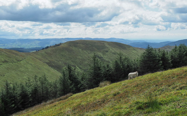 Sheep on hill slope