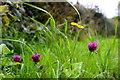H4868 : Wild plants, Camowen by Kenneth  Allen