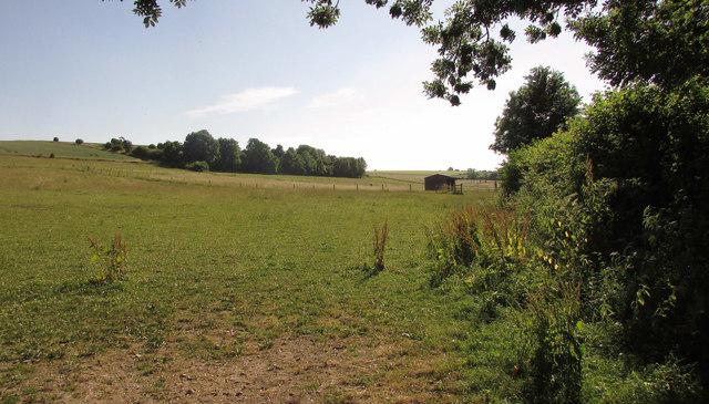 Grass fields, Homington