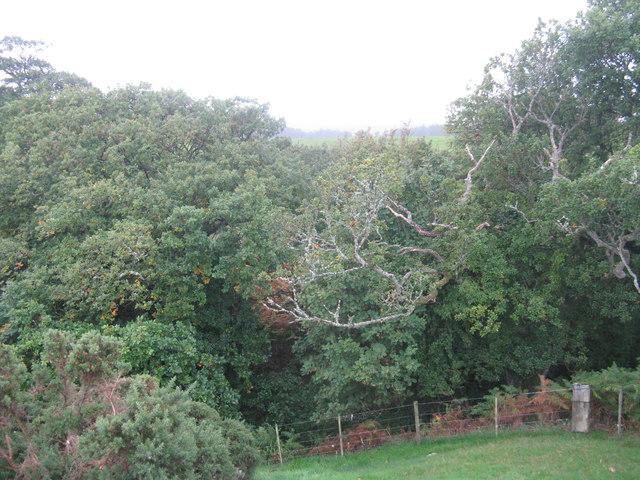 Woodland at Weatherly