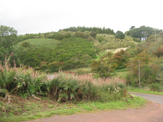 Scrubby hillside below The Brunt