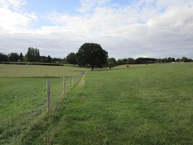 Field edge near Three Ashes