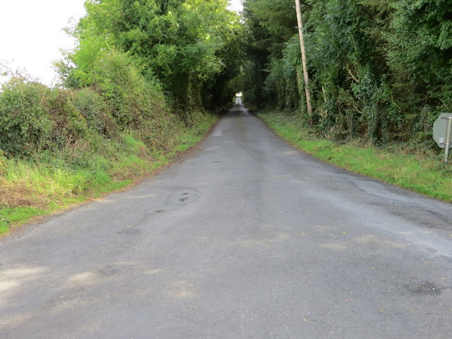 A tree-lined road (L6520) to Milltown
