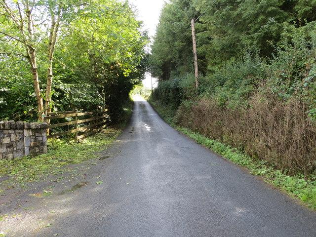 A tree-lined road (L6520)  near Milltown