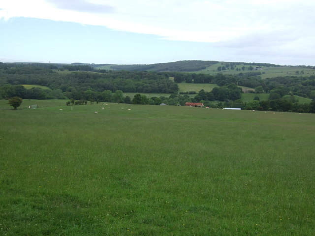 Grassland towards Newhall Farm