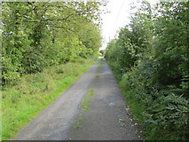 M8072 : Hedge enclosed lane near Ardlagheen More by Peter Wood