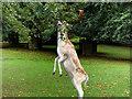 SJ7387 : Stag at Dunham Massey Deer Park by David Dixon