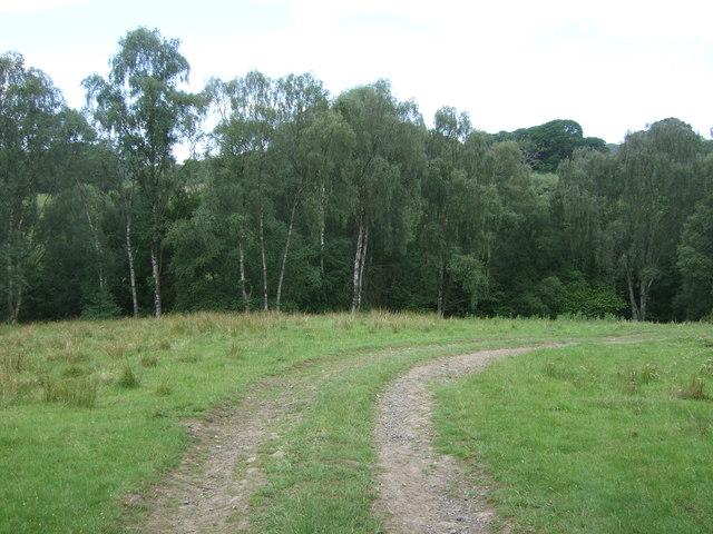 Farm track off Howlea Lane