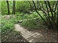 TQ4941 : Path through woodland near Markbeech by Malc McDonald