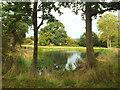 TQ5044 : Pond near Chiddingstone by Malc McDonald