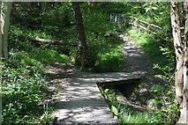 TQ5942 : Boardwalk, Barnett's Wood by N Chadwick