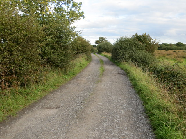 Hedge enclosed unsurfaced lane near Creggancor