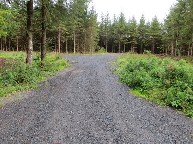 Track entry into forestry near Derreenteige