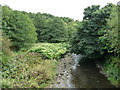 SD7920 : The wooded valley of the River Irwell by Christine Johnstone