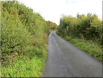M9662 : Hedge-lined lane between Clooncah and Cloonmore by Peter Wood