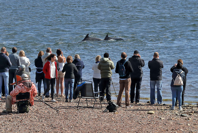 Photographing dolphins at Chanonry Point