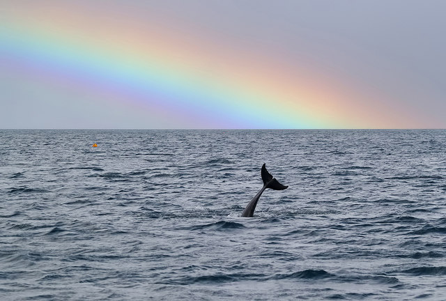 A dolphin at the end of a rainbow
