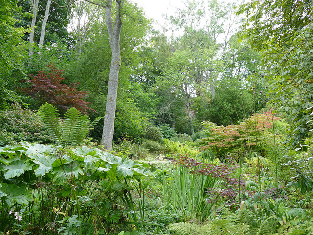 Woodland on the Paxton House estate