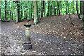 TQ3363 : Bollard in the Woods by Des Blenkinsopp