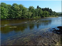 NS3977 : The River Leven above Dalquhurn Point by Lairich Rig