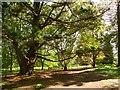 SU9941 : Footpath in Winkworth Arboretum by Graham Hogg