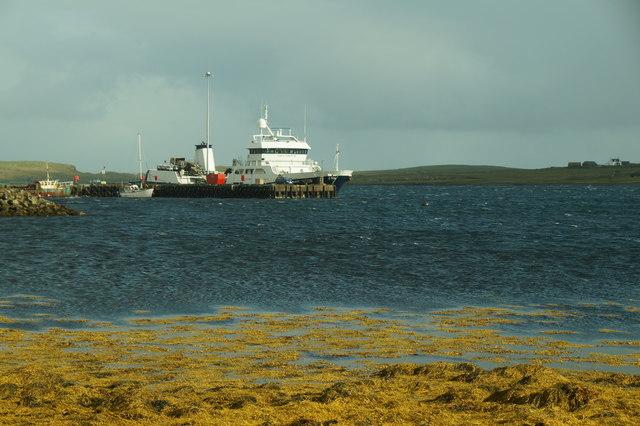 The fish carrier MV Ronja Commander at Baltasound pier