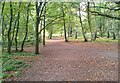 SU7937 : Woodland Path on Kingsley Common, Hampshire - 140918 by John P Reeves