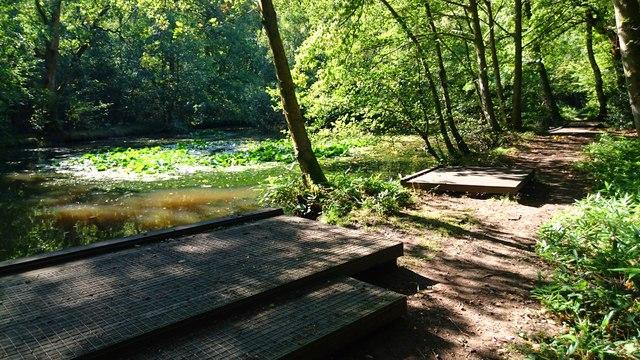 Deadwater Valley LNR Pond, Bordon, Hampshire - 170918
