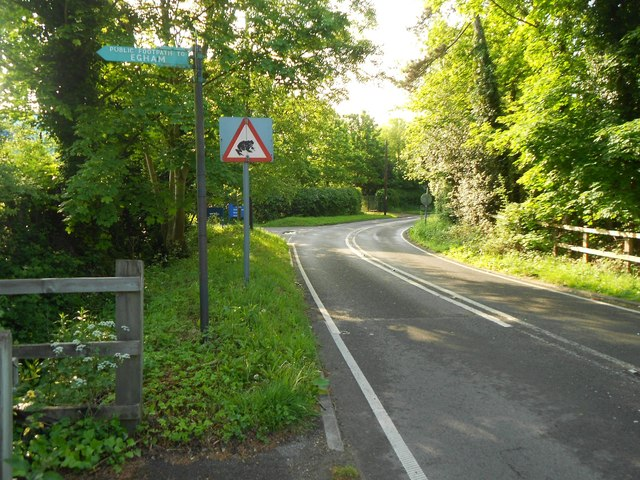 Egham: Prune Hill road with Migratory Toad Crossing warning sign