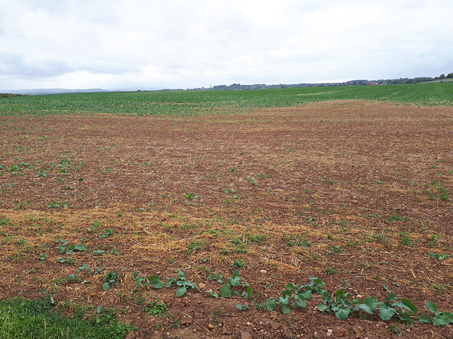 Field west of Sand Barn Lane