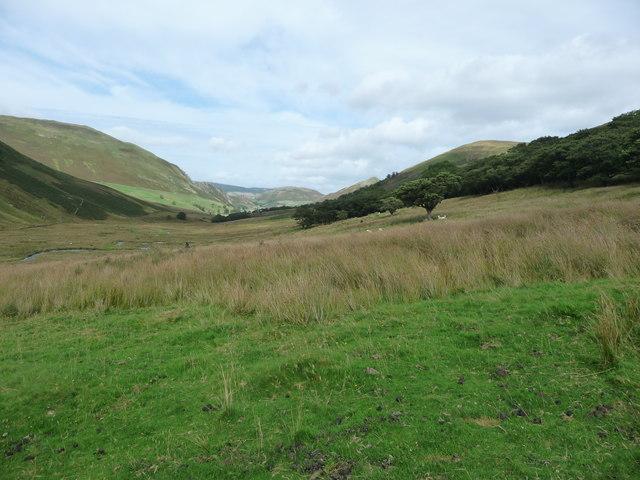 Rough grazing below woodland in Ramps Gill