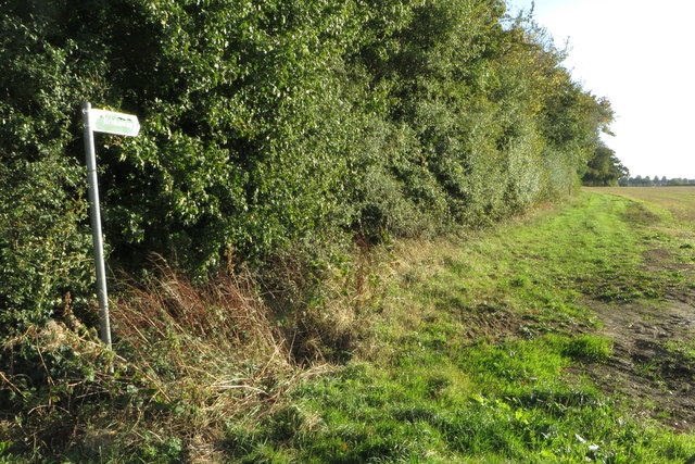 Bridleway by the covert